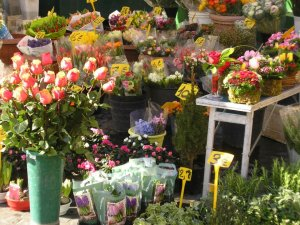 flowers rome